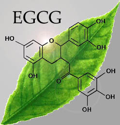 L'ECCG